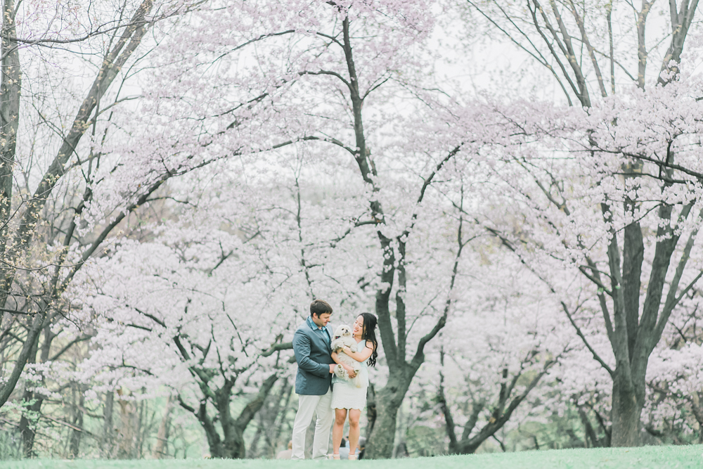 Toronto_High_Park_Cherry_Blossom_Engaement_Photo