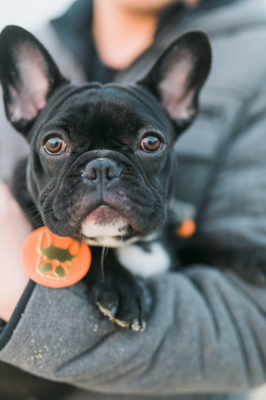 Hong_Kong_Family_Dog_Portraits