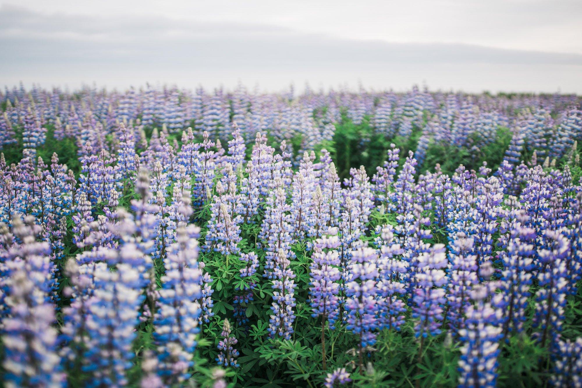 Iceland_Wedding_Elopement_Photos