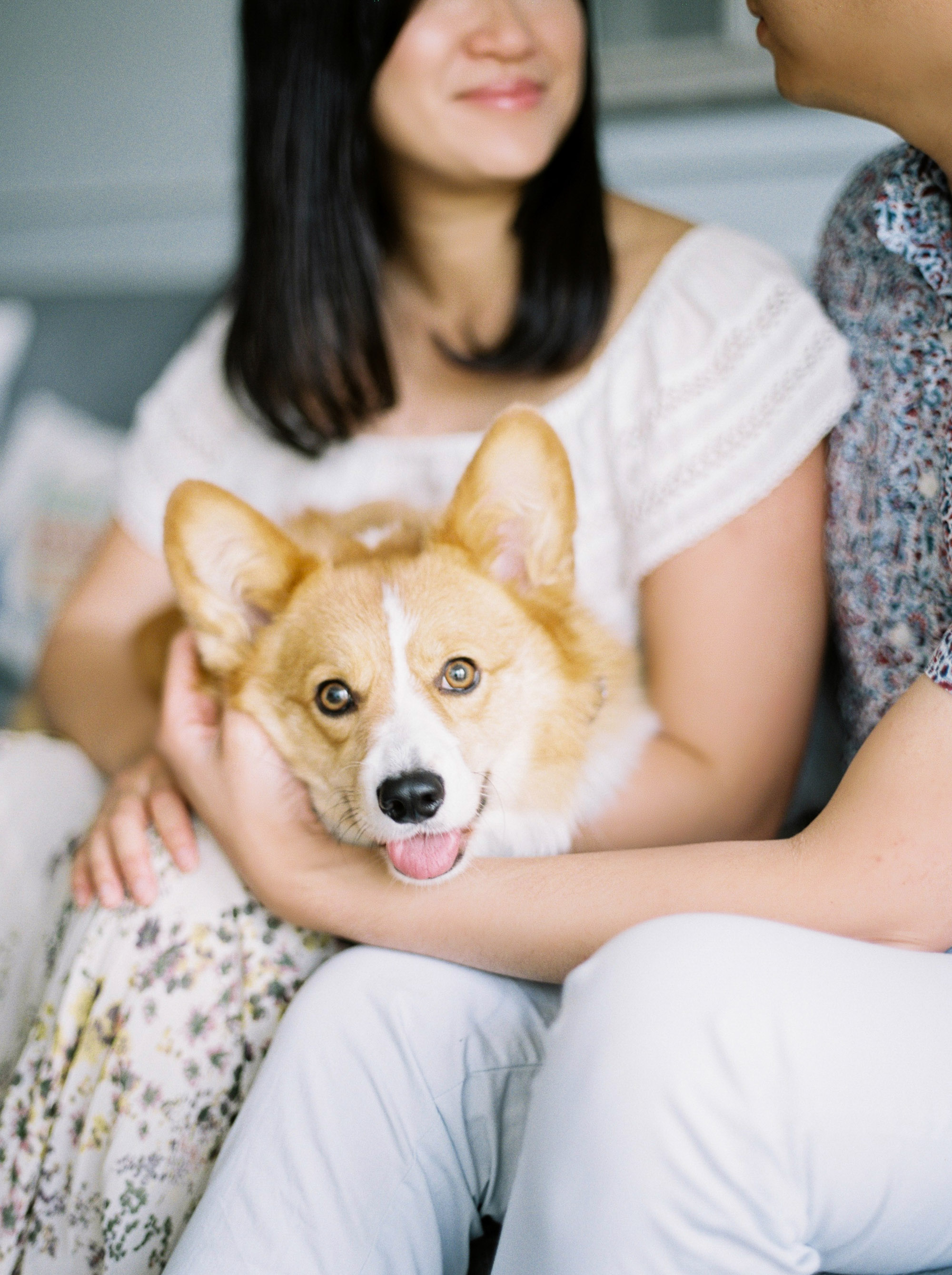 Corgi Family Photos